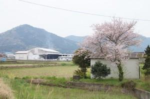宇和町卯之町の風景