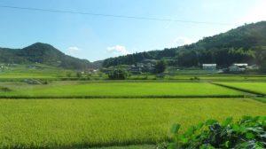 世羅町の景色
